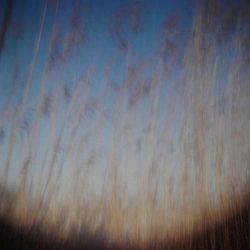 Andrea Grote: O.T. (Darss_II_5.2.2015, 1min)